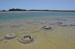 Stromatolithen im Lake Thetis