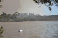 Kontrollierter Waldbrand in Walpole