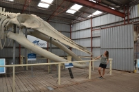 Ehemalige Walfangstation die heute als Museum dient