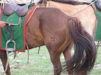 Diesem sind wir in der Mongolei sehr oft begegnet, die Swastika, Symbol der Festigkeit, Ausdauer und Beständigkeit.