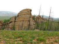 Die ohnehin schon sehr dürftig wachsenden Bäume im Norden der Mongolei werden von Borkenkäfer dahingerafft.