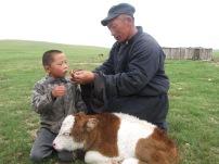 Diese wird schnell dem Sohn übergeben, der es sich mit einem frisch geborenen Kälbchen gemütlich macht und spielte.