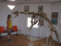 In einem kleinen Museum zeigt man uns ein angebliches Dinosaurierskelett- die Beine gestanden sie wurden jedoch von Kamelen ausgeliehen, wir aber glauben, dass hier viel mehr von Kamelen und Pferden ausgeliehen wurde ;)