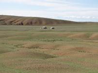 Immer wieder tauchen Jurten in der Landschaft auf.