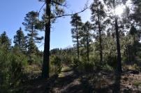 Wanderung bei Arenas Negras zum Mt. Garachico